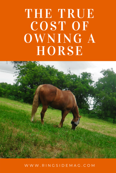 The true cost of owning a horse